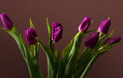 Bunch of purple tulips Royalty Free Stock Images