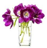 Bunch of purple tulips in vase Stock Photo