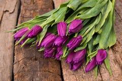 Bunch of purple tulips Stock Photos