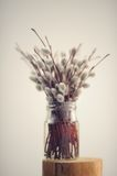 Bunch of pussy willow twigs in glass jar on white background Stock Photo