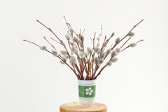 Bunch of pussy willow twigs in green vase on white background Royalty Free Stock Images