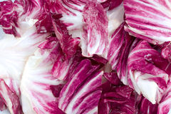 Bunch of Radicchio. Bunch of Reddish Purple and White Radicchio Royalty Free Stock Images