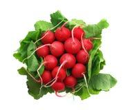 Bunch of radish. Element of design Royalty Free Stock Image