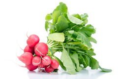 Bunch radish Stock Images