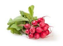 Bunch of radish isolated on white Stock Image