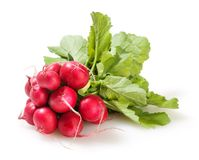 Bunch of radish isolated on white Royalty Free Stock Photo