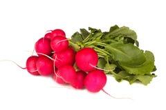 Bunch of radish isolated on white. Background Stock Photography