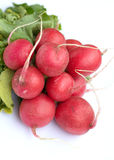 Bunch of radish isolated on white closeup. Vertical view Stock Image