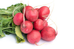 Bunch of radish isolated on white closeup. Horizontal view Royalty Free Stock Images