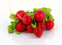 Bunch radishes 1 Royalty Free Stock Photo