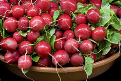 Bunch of radishes. Royalty Free Stock Images