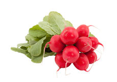 Bunch of radishes. Stock Image