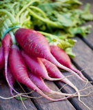 Bunch of radishes. Stacked side by side Royalty Free Stock Images