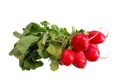 A bunch of radishes. Bunch of radishes with their stalks Stock Image