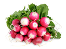Bunch of radishes Stock Photo