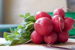 Bunch of radishes. Radish, the bunch of Stock Photo