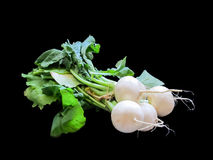 Bunch of radishes on black background. A bunch of radishes on the black background for web use Stock Photography