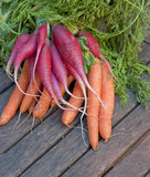 Bunch of radishes and carrots. Bunch of radishes on bunch of carrots Royalty Free Stock Photo