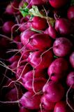 A bunch of radishes. stock image
