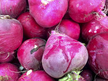 Bunch of radishes at farmers market Royalty Free Stock Images