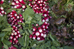 Bunch of radishes. Heads on the market stall Royalty Free Stock Photos