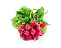 Bunch of radishes. Isolated on white background Stock Photos