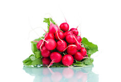 Bunch of radishes isolated on white background.  Stock Photography