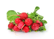 Bunch Radishes and Leaves. A bunch of fresh radishes and leaves Royalty Free Stock Photography