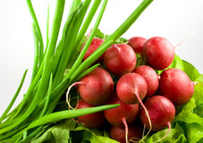 Bunch of radishes,lettuce and chive. Bunch of radishes with lettuce and chive Royalty Free Stock Images
