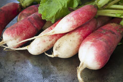 Bunch of Radishes over Dark Slate Stock Photography