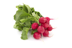 Bunch of radishes. Small bunch of radishes on white background Stock Image