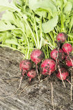 Bunch of radishes with soil Stock Photo