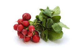 Bunch of radishes with stalks stock images