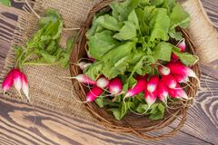 Bunch of radishes in a wicker basket on the table. Bunch of fresh radishes in a wicker basket outdoors on the table. Top view Royalty Free Stock Photos