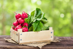 Bunch of radishes in a wooden box. On a wooden background Royalty Free Stock Image