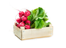 Bunch of radishes in a wooden box. Isolated on white background Stock Images