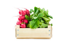 Bunch of radishes in a wooden box. Isolated on white background Royalty Free Stock Image