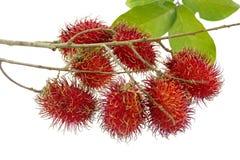 A bunch of rambutan. Bunch of rambutans is asean fruit Stock Photography