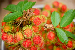Bunch of rambutans. Red rambutan fruit with green hair,selective focus and blur image Stock Photos