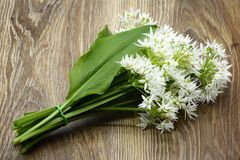 Bunch of ramson wild garlic flower heads and leaves on wooden ta. Ble Stock Image