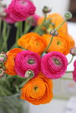 Bunch of ranunculus Stock Photos