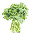 Bunch of Rapini. A bunch of Rapini vegetable isolated on white royalty free stock photos