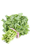 Bunch of Rapini. A bunch of Rapini vegetable isolated on white stock photography