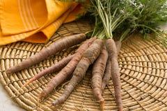 Bunch raw carrots-garden to table royalty free stock photos