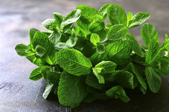 Bunch of raw fresh mint. Bunch of raw fresh mint on a dark slate,stone or metal background Royalty Free Stock Image
