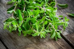 Bunch of raw green herb marjoram on a wooden table Stock Photos