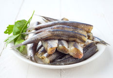 Bunch of raw sardines on plate with parsley Royalty Free Stock Photos