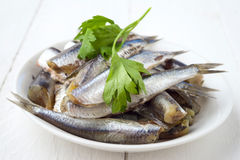 Bunch of raw sardines on plate with parsley Royalty Free Stock Photography
