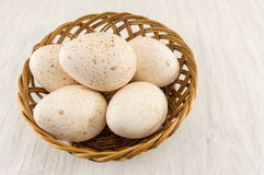 Bunch of raw turkey eggs Stock Images