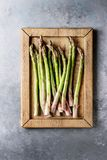 Young Green asparagus Stock Photography
